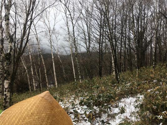 ふだんは一面雪景色なのですが、笹が見えています