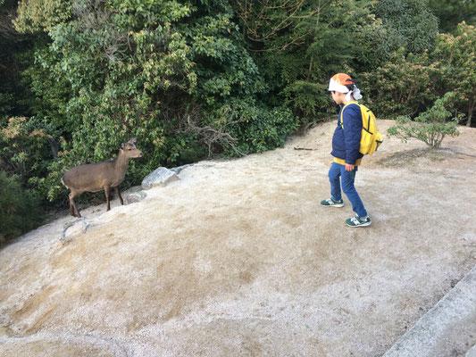 鹿が上まで来ていました