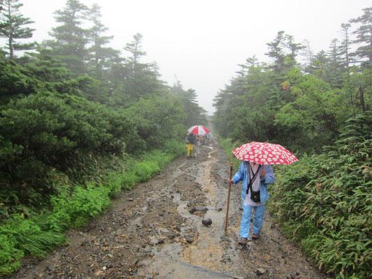 道の様子で雨の強さが分かります