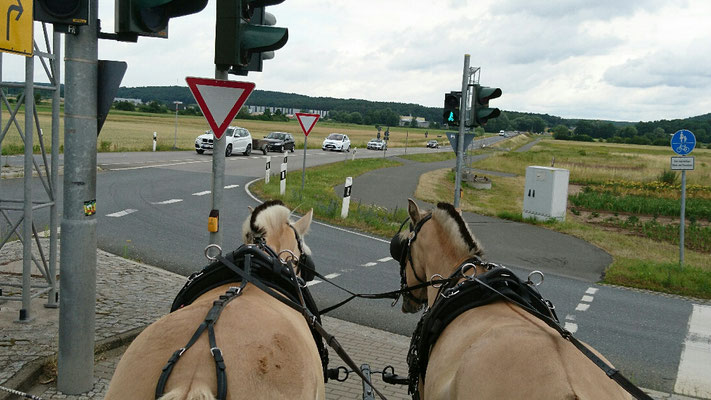 Ponys die Ampel ist grün 😂