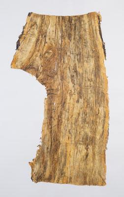 Skin of Tree 16|197×121cm|2015|craft glue,oil ink,paper