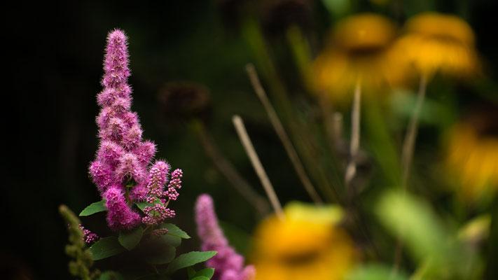 Flora: Waldblume_1