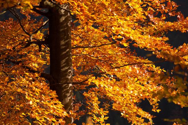 Harzwald: Herbstwald_1