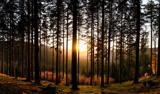 Harzwald: am Morgenbrodstaler Graben_2
