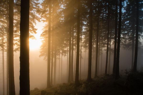 Harzwald: Wald-Nebel_3
