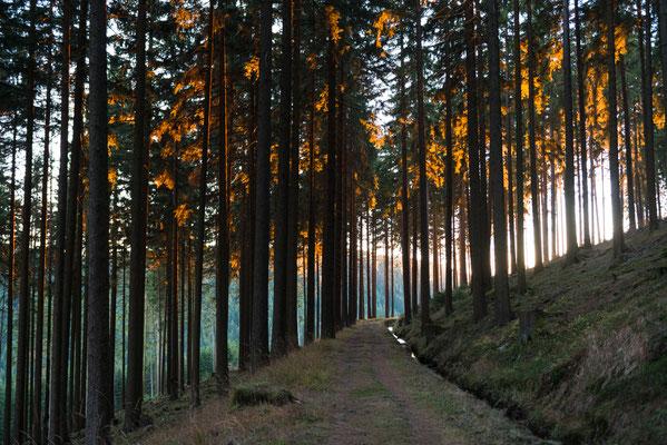 Harzwald: am Morgenbrodstaler Graben_1