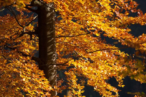 Impressionen_Herbst_1