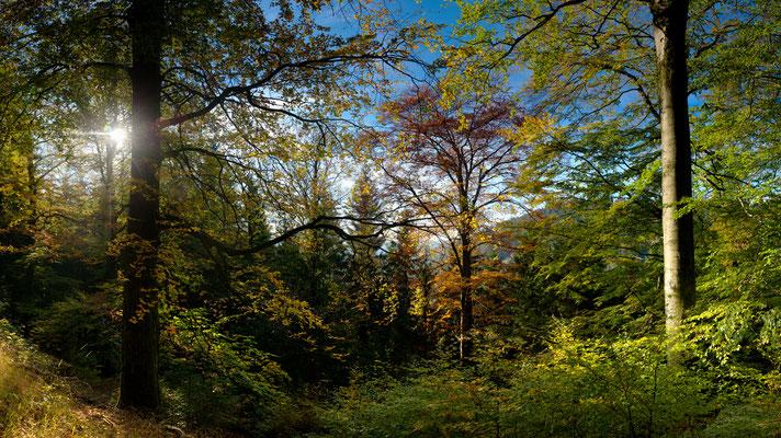 Harzwald: Herbstwald_2