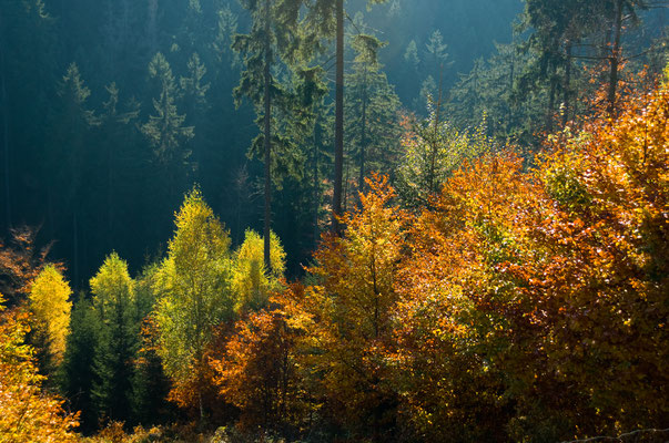 Harzwald: im Romketal
