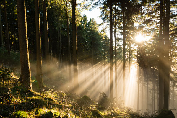 Harzwald: Wald-Nebel_1