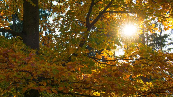 Harz-Wald: im Laubtal am Acker