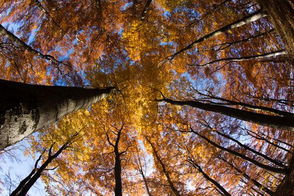 Harz-Wald: an der Kuhkolksklippe