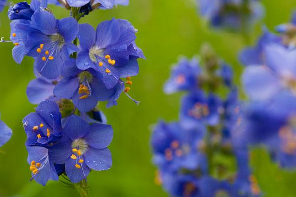 Flora: Wiesenblumen_1