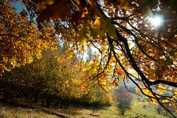 Impressionen_Herbst_2