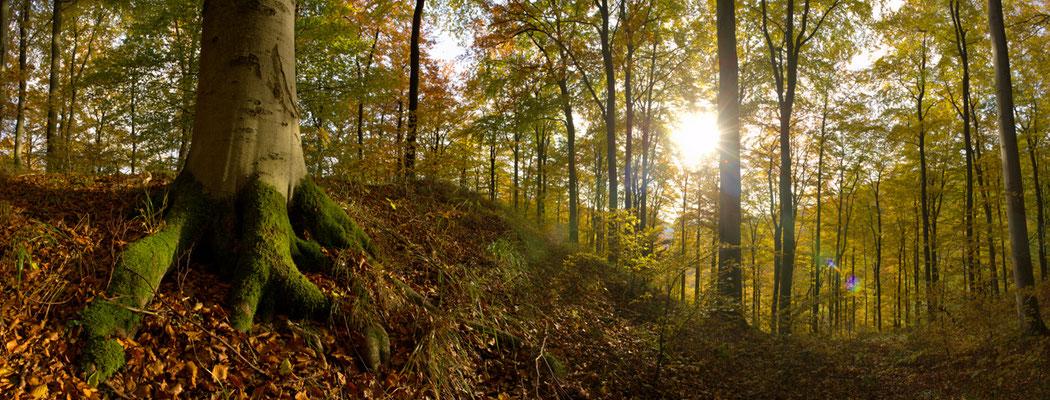 Harzwald: Herbstwald_3