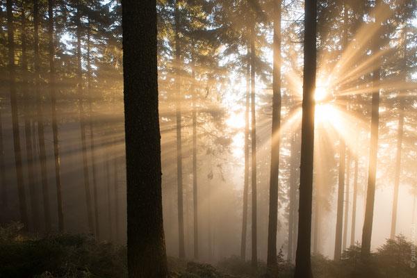 Harzwald: Nebel_2