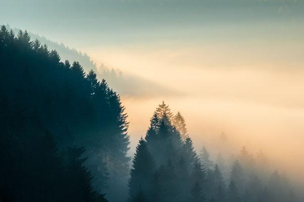 Harzwald: Wald-Nebel_4