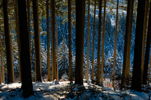 Winterwald am Morgenbrodstaler Graben