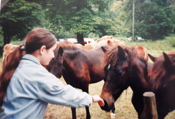 Wenigstens Pferde im langweiligen Urlaub gefunden!