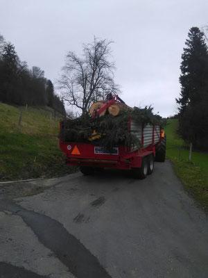 Abtransport des Baumes zum Hacker