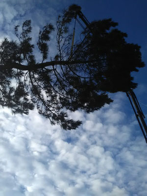 Baum wird mit Kran weggehievt
