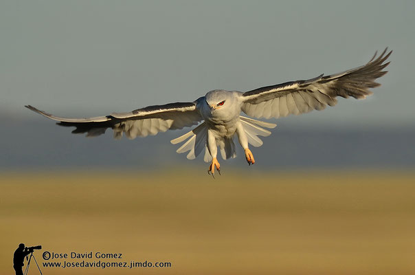 vuelo fotografiado desde hide para fotografia de naturaleza