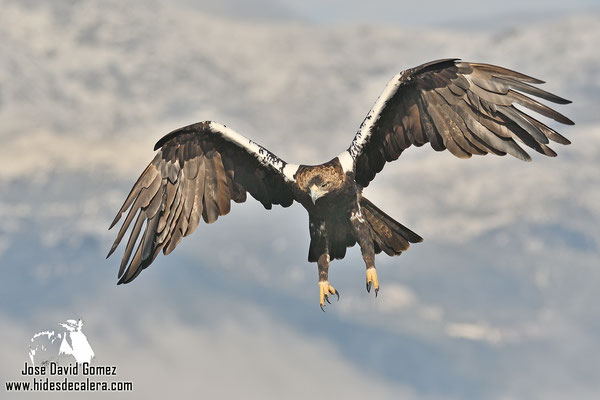 Imperial eagle photo hide in Spain