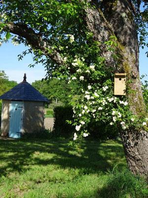 Dans le jardin de Jacqueline et Jean-Jacques