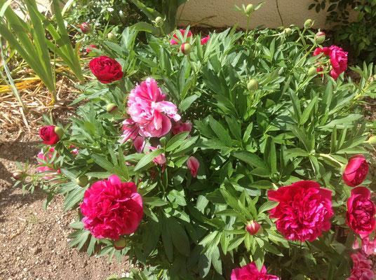 le jardin de Pascale de Rians