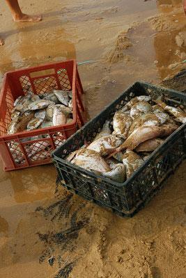 FISHERMAN - MEIA PRAIA LAGOS 2006 -9200637