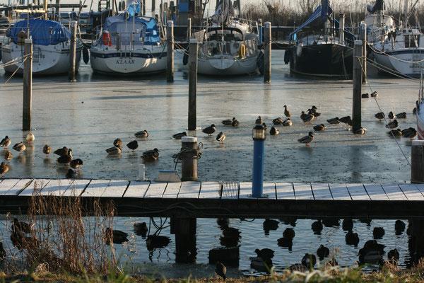 Durgerdam 2009 - bestelnr. 2009018