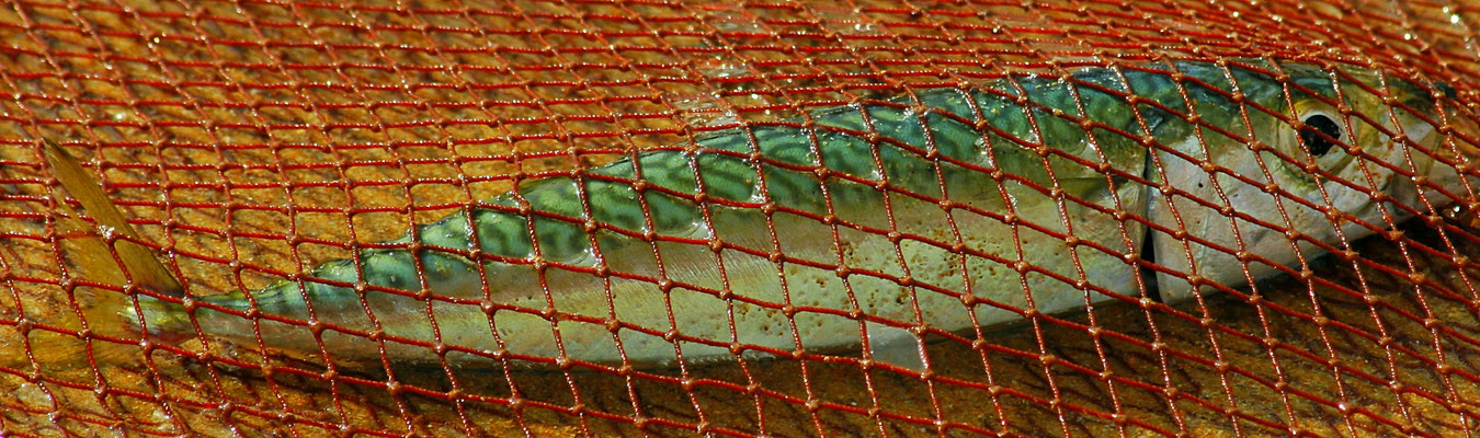 FISHERMAN - MEIA PRAIA LAGOS 2006 -9200613