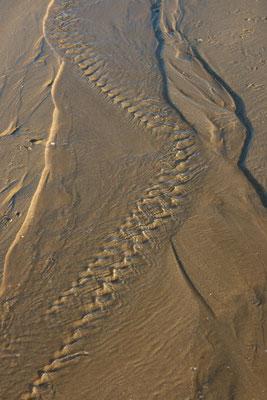 Meia praia  2007