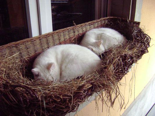 Deux de nos chats endormis...