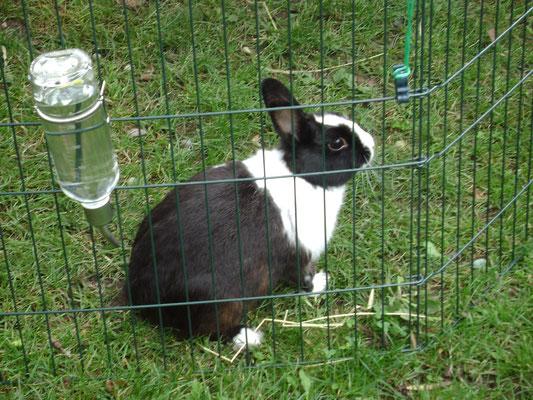 Panpan, notre lapin