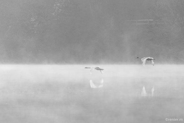 Nebelflug, Fotoforum Urkunde für besondere fotografische Leistung