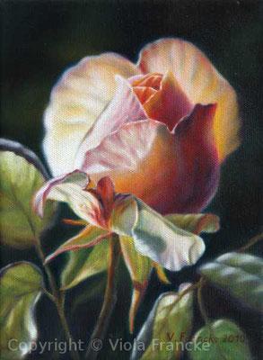 Eden Rose II - 24 x 18 cm