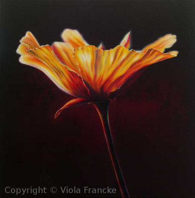 'Kalifornischer Goldmohn' - 50 x 50 cm