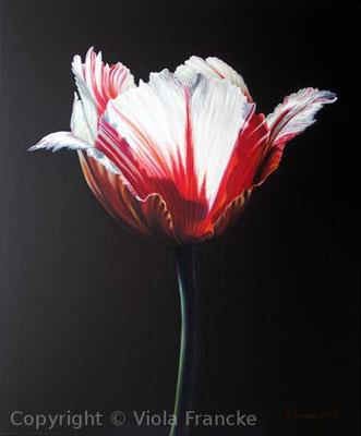 'Ice Folllies' - 60 x 50 cm