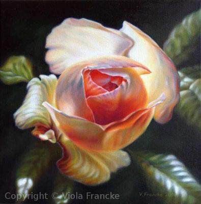 'Eden Rose 85 III' - 30 x 30 cm