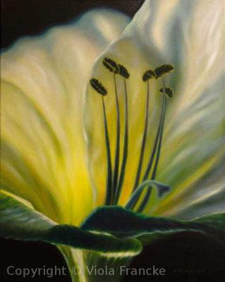 Alteo's Flower - 40 x 30 xm
