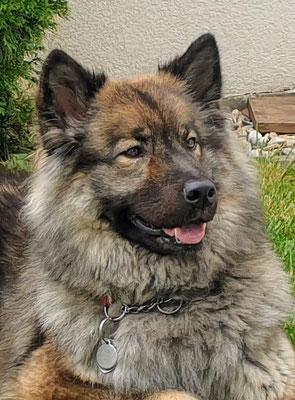Ayumi vom Schwarzwaldwolf