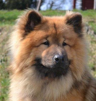 Lem-Osco von der alten Wolfsangel