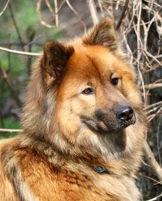 Aria vom Hund im Wolfspelz