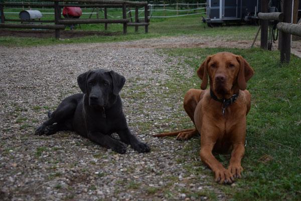 Rocco und Nino