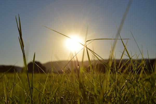 Die langsam untergehende Sonne auf der 6ha großen Stutenwiese