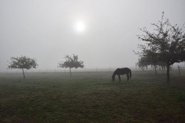 Falco im Nebel