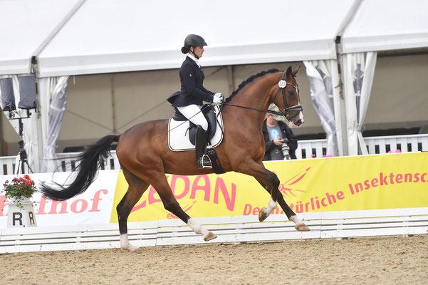 Internaionales Hannoveraner Reitpferdechampionat in Verden