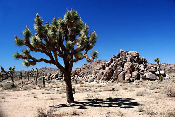 USA, Kalifornien, Joshua Tree National Park