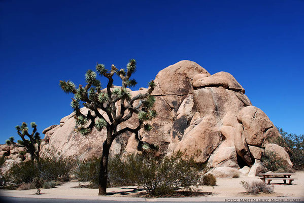USA, Kalifornien, Joshua Tree National Park